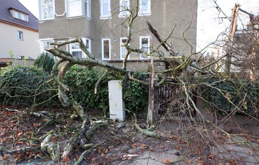 Blisko tysiąc interwencji w ciągu ostatniej doby podejmowali strażacy w Zachodniopomorskiem w związku z silnie wiejącym wiatrem. Byli wzywani głównie do usuwania powalonych drzew i konarów.