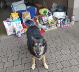 Niepołomice. Społeczna akcja dla schroniska Psie Pole. Zebrano mnóstwo darów dla zwierzaków