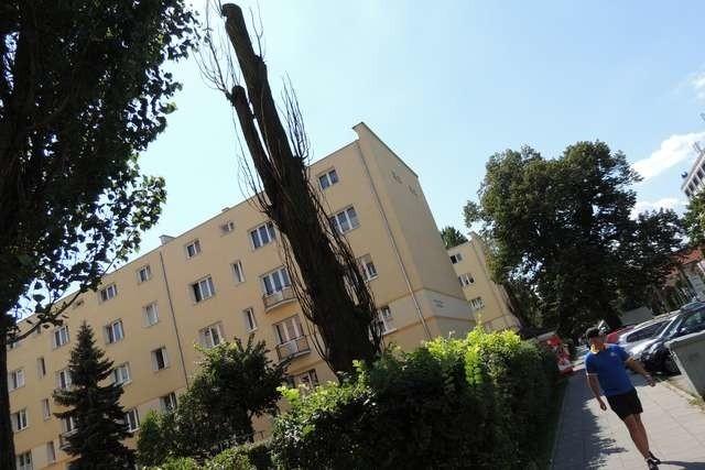 Martwe drzewa mogą być niebezpieczne dla aut i przechodniów. Na zdjęciu: uschnięte drzewo na ulicy Grudziądzkiej u wylotu Rejtana