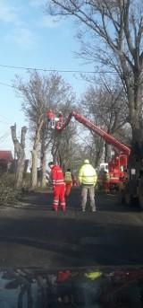 BYTNICA: Długo wyczekiwany remont drogi rozpoczął się. Ale czemu wycinają wszystkie drzewa? [ZDJĘCIA]