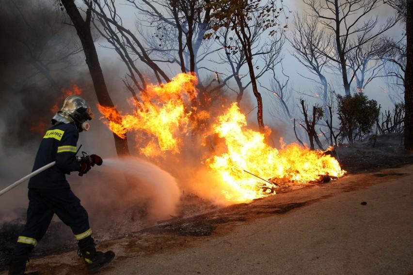 Pożar w Grecji. Ściana ognia runęła nocą na przedmieścia Aten. Strażacy z trudem ją powstrzymali [ZDJĘCIA] [VIDEO]