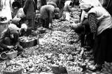 Kiedyś to było grzybów. Archiwalne zdjęcia - nie uwierzysz w te ilości! [galeria zdjęć]
