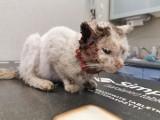 Taki los ludzie gotują zwierzętom. Zobacz tegoroczne interwencje wolontariuszy opolskiego Towarzystwa Opieki nad Zwierzętami