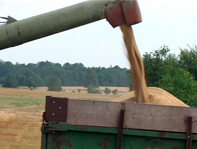 Największy w regionie elewator w Stoisławiu ruszył w poniedziałek ze skupem zbóż. Rolnik może liczyć na 480 zł za tonę pszenicy. Żyto i owies wyceniono na 320 zł, a jęczmień – na 370 zł. To o ok. 30 proc mniej, niż rok temu. Jeszcze mniej (o 20-30 zł) płacą w elewatorach w Darłowie i Bobolicach.