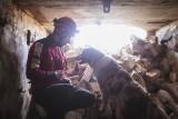 Psi ratownicy potrzebują pomocy. Akcja Przyjaźń Łączy – Wspólnie dla Zwierząt