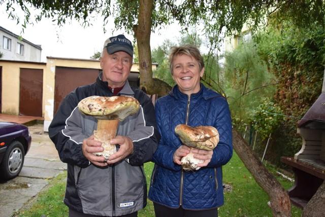 Regina i Jan Ciszkowie ze swoimi grzybami gigantami