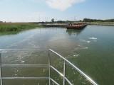 Węgorze w Jamnie. Rok temu odłowiono tam aż 33 tony ryb