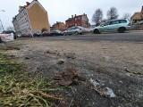 Trakt Książęcy w psich odchodach. Wciąż wielu mieszkańców Słupska nie sprząta po swoich pupilach [ZDJĘCIA]