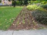 Na jesieni zazieleni się w Puławach. Na terenie miasta realizowane są nasadzenia drzew, krzewów i bylin