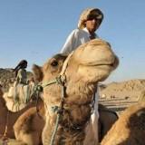 Na wielbłądzie po Egipcie