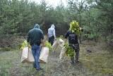 Pole marihuany na leśnej polance. Policja zlikwidowała kolejną plantację w Łódzkiem