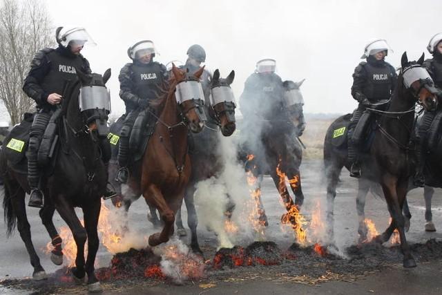 Egzamin koni policyjnych w Chorzowie