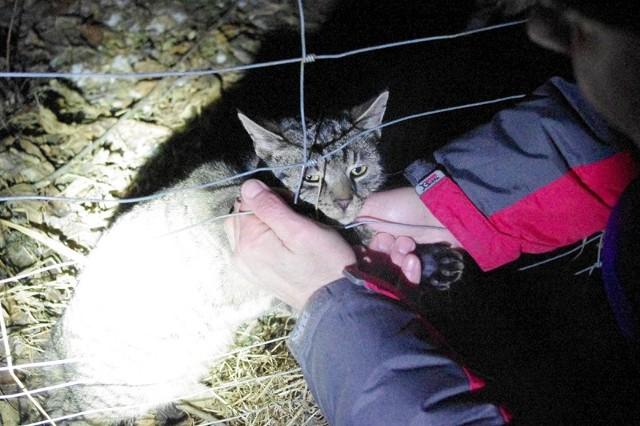 Kot próbował walczyć o życie, musiał się wyrywać, bo jego ciało było wplątane również w metalową siatkę, którą był ogrodzony teren.