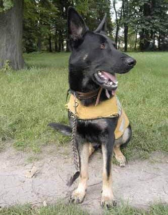 W poszukiwaniach zaginionego uczestniczył pies Platon ze STORAT-u.