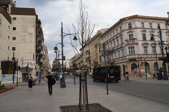 Kolejne drzewa uschły na Piotrkowskiej. Część platanów klonolistnych trzeba będzie wymienić. W tym roku problemy młodych drzew potęguje silna susza. Rozwiązaniem mają być wymiany na gwarancji albo... specjalne worki.CZYTAJ DALEJ NA NASTĘPNYM SLAJDZIE