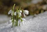 Pogoda na wiosnę 2021: Prognoza długoterminowa. Kiedy będzie wiosna kalendarzowa i astronmmiczna? Temperatury nas zaskoczą