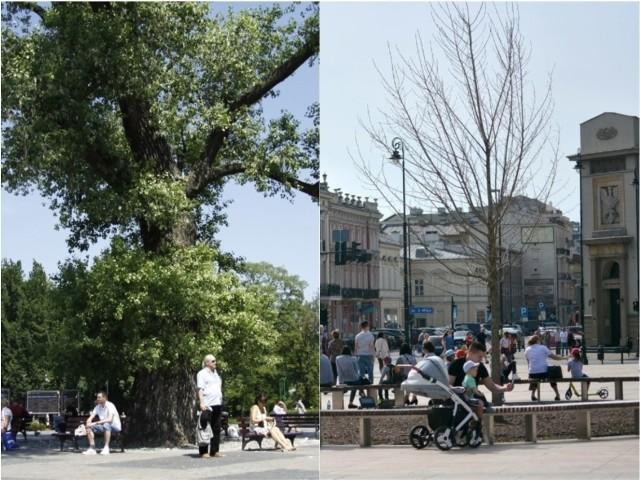 Plac Litewski: Baobab i jego następca