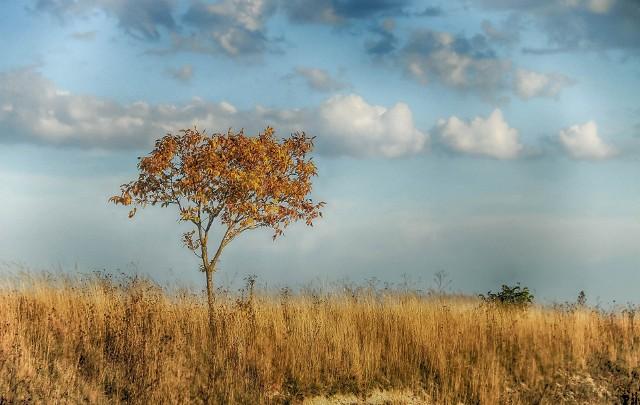 Lato 2020 może być ekstremalne pod względem temperatury i zjawisk meteorologicznych. Ze względu na ciągłe zmiany w klimacie, tego lata częstsze mogą być burze, wichury i nagłe, skrajne zmiany pogody.