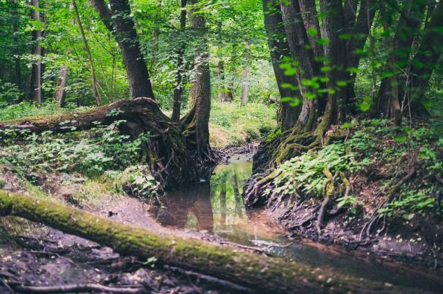 Srebrna meandruje, zaś jej brzegi i bezpośrednią okolicę porastają drzewa z odsłoniętymi korzeniami. Każde takie drzewo zdaje się być cudem natury – relacjonuje Robert Bogusz, sędzia Sądu Okręgowego w Gorzowie i miłośnik fotografii. Zdjęcia znad Srebrnej wykonał w tonacji matte.