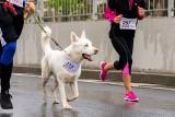 Sportowe rasy psów. TOP 11 ras psów dla biegaczy i osób żyjących aktywnie. Są wytrzymałe i kochają być w ruchu! [13.01.2020]