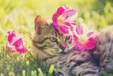 Rośliny trujące dla kotów. Masz w domu kota? Pamiętaj, że niektóre popularne rośliny mogą mu zaszkodzić