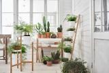Czy wiesz, że w IKEA znajdziesz rośliny i narzędzia ogrodowe?