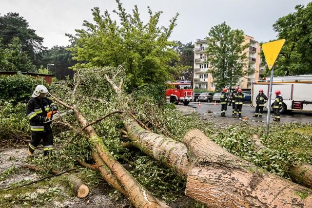 Strażacy najwięcej wyjazdów do połamanych drzew odnotowali w powiecie wałbrzyskim. Zdjęcie ilustracyjne