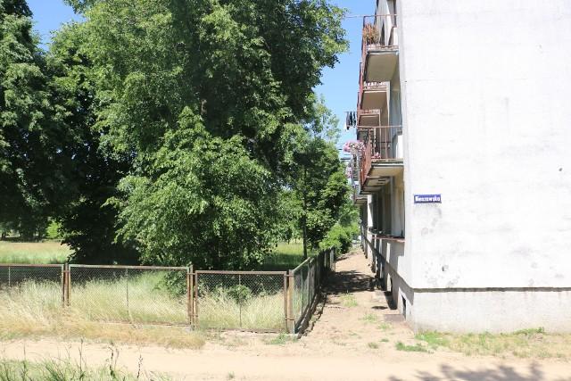 Za balkonami bloku przy Nieszawskiej stanie market. Stare drzewa zostaną wycięte
