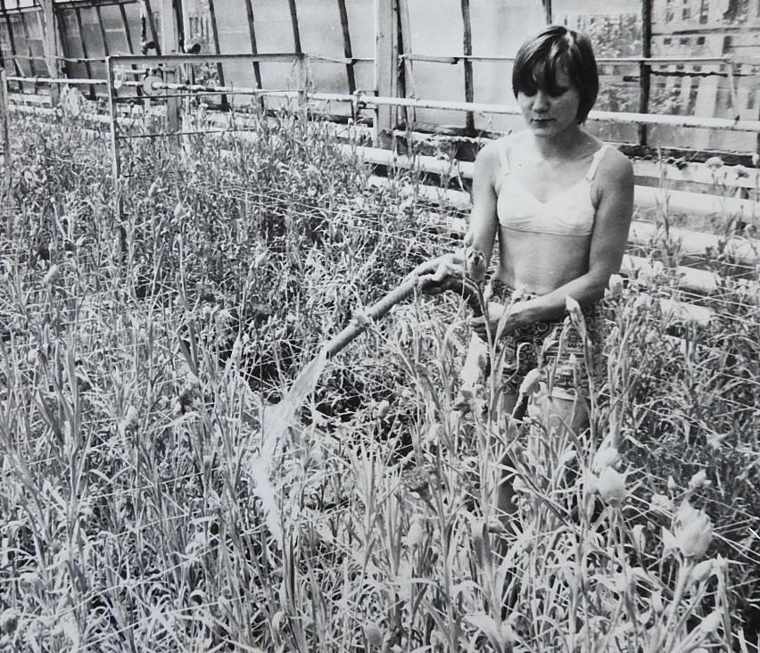 Zakład zieleni w Olecku, 1986 rok