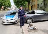 Policjanci uratowali szczenięta, które były zamknięte w samochodzie w Skarszewach. Właścicielowi psów grozi kara