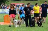 Dog Chow Disc Cup: Najlepsze psy w Dog Frisbee na Cytadeli [ZOBACZ ZDJĘCIA]