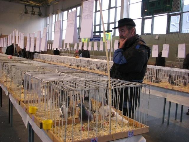 Po raz pierwszy miłośnicy gołębi z terenu miasta i powiatu mają możliwość pochwalenia się swoimi ptakami przed na swoim terenie.