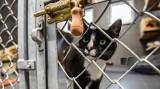 """Dzień Otwarty w """"Sopotkowie"""". Schronisko dla zwierząt odwiedzili miłośnicy czworonogów"""