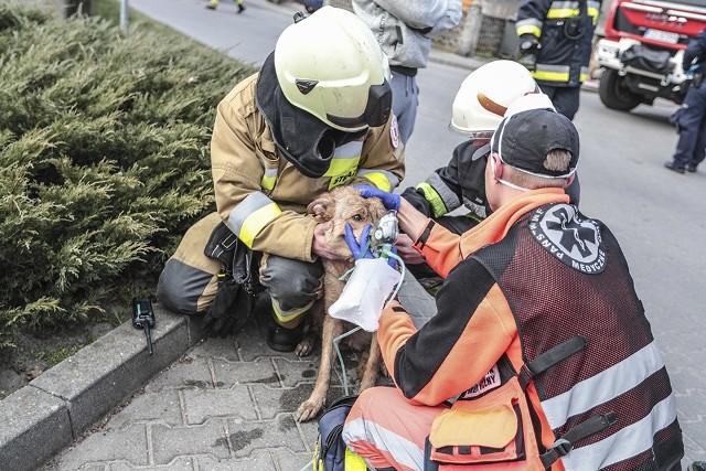 Strażacy pomogli mieszkańcom opuścić dom. Okazało się jednak, że w płonącym budynku mogą przebywać jeszcze dwa psy.