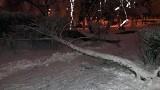 Drzewo pod naporem śniegu runęło na chodnik w Zielonej Górze [ZDJĘCIE CZYTELNIKA]