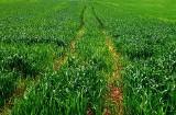 Oddaj opakowania po środkach ochrony roślin, bo zmniejszą ci dopłaty