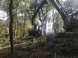 Masowa wycinka drzew w Masywie Ślęży. Co się dzieje? [ZDJĘCIA]