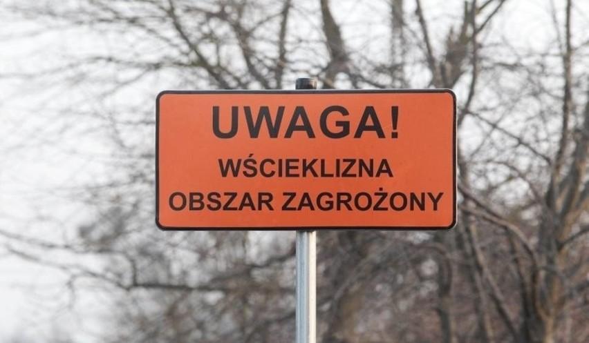 Szczecin: Uwaga na wściekliznę! Wyprowadzaj psa na smyczy
