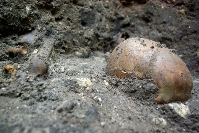 Czy poznamy dzieje czaszki znalezionej w Starym Zagórze pod Krosnem Odrzańskim?