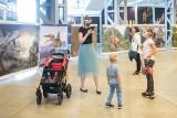 Dinozaury na MTP w Poznaniu. Wystawa obrazów w 3D. Ponad 30 gatunków drapieżników w jednym miejscu