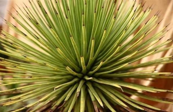 Kaktus z wystawy w WOAK-u