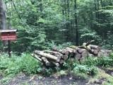 Drzewa z rezerwatu w Lesie Zwierzynieckim idą na opał (zdjęcia)