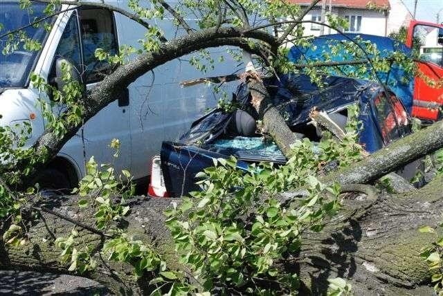 Drzewo spadło na samochody. Nikomu nic się nie stało.