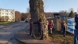 Topola z Helu walczy o tytuł Europejskiego Drzewa Roku 2018. Teraz odwiedził ją Rob McBride -Treehunter!