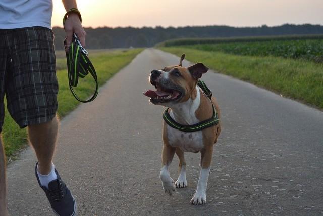 Hubert U. miał - ocenia sąd - prawny obowiązek by zabezpieczyć innych przez psem