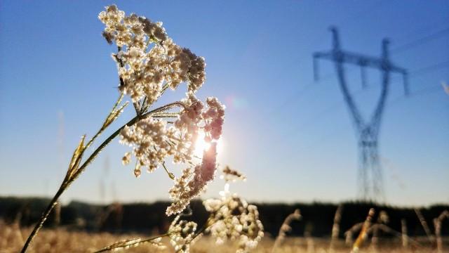 Oszronione kwiaty ostatniego dnia września to znak, że zima zbliża się wielkimi krokami. Zobaczcie niezwykłe fotografie Wojciecha Wojtkielewicza.