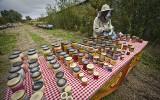 MPS International rozbudowuje swoje pszczele osiedle [ZDJĘCIA]