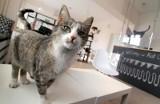 Wrocławskie koty ratują gastronomię. To niewiarygodne!