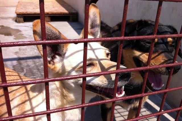 Utrzymanie psa lub kota w schronisku kosztuje średnio od 150 do 200 złotych miesięcznie.