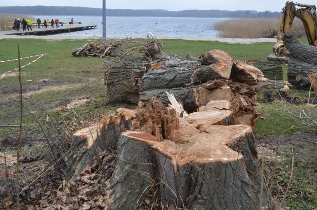 Stare drzewa poszły pod topór. Były mocno spróchniałe.
